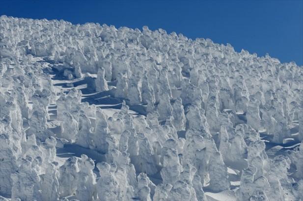 壮观的藏王山的树冰原区。