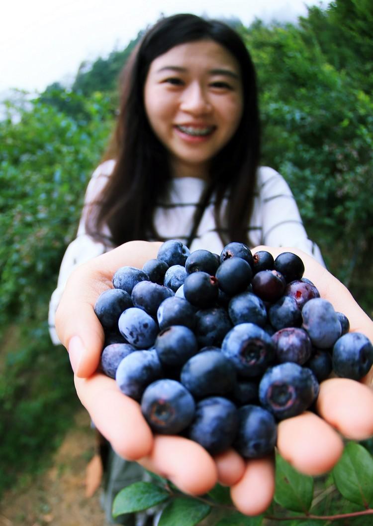 双手捧着的小蓝莓﹐实在引人垂涎。