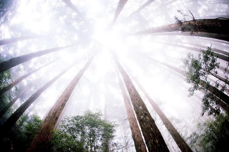 雪霸休闲农场内自然生态丰富多元﹐参天大树随处可见。