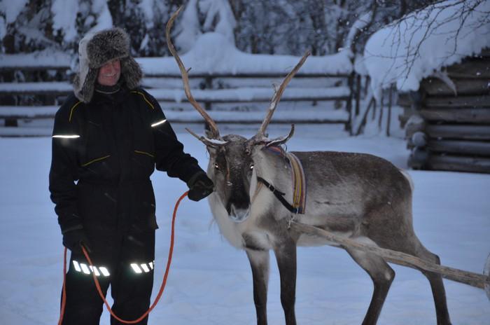 进入圣诞老人村之前,当然得先他的得力伙伴——驯鹿见见面!