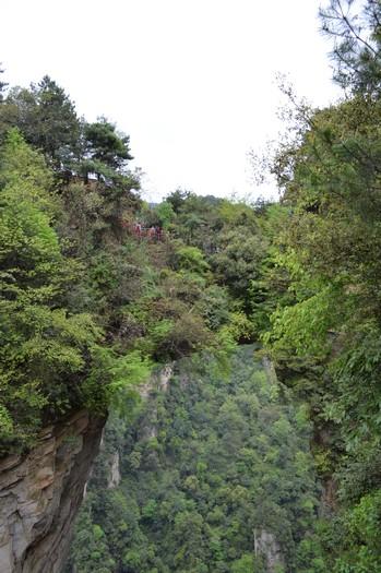 矗立的柱状山之间,在那茂密的树丛中可是有一道桥连接着,你看到吗?