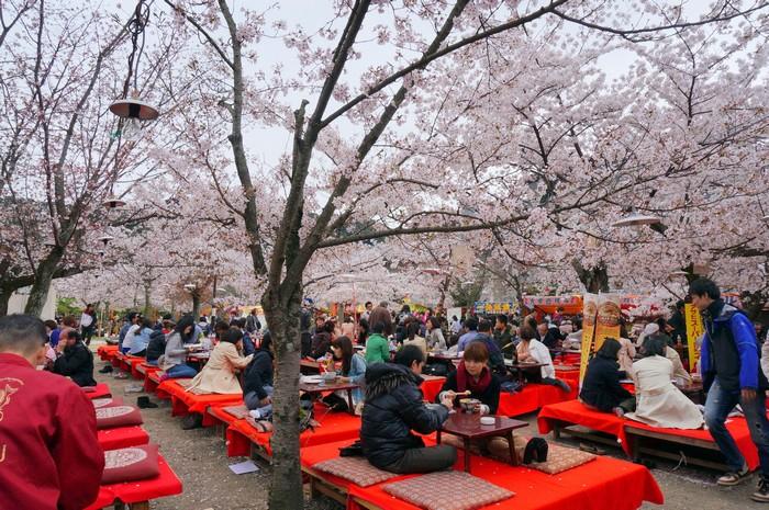 现今日本人大多都是在樱花树旁,欢乐地野餐或聚餐为主。