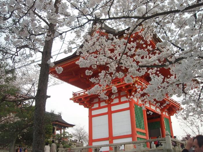 春天赏樱是日本的庆典活动,也是日本传统习俗之一。