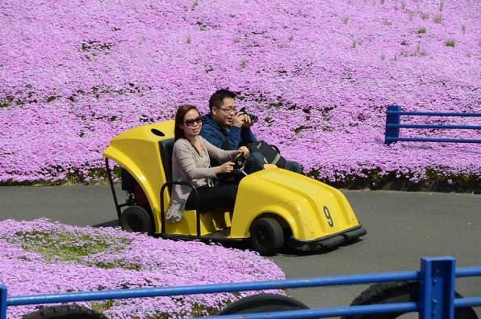 小心驾驶,别把花朵撞坏哦!
