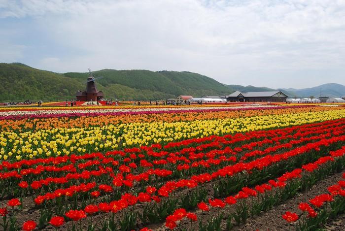 让游客犹如置身荷兰,院内还设有大型风车,是游客们拍照取景的焦点。
