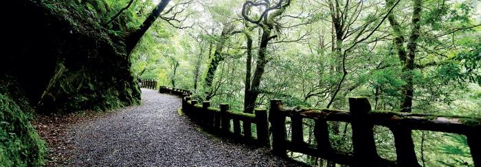 拉拉山自然保育区