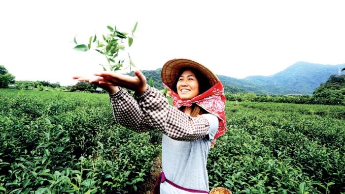 祥语有机农场 穿上采茶装备,体验在茶园里采茶的乐趣。