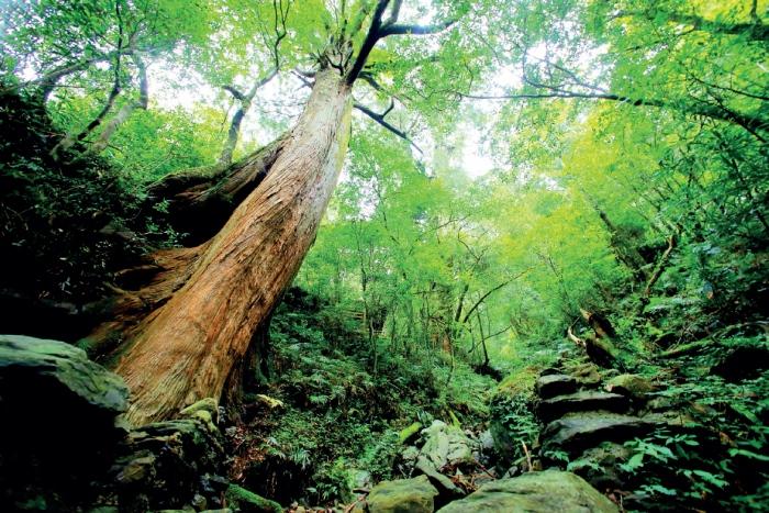 拉拉山自然保育区 徒步在巨木群,仿佛能呼吸到仙气。