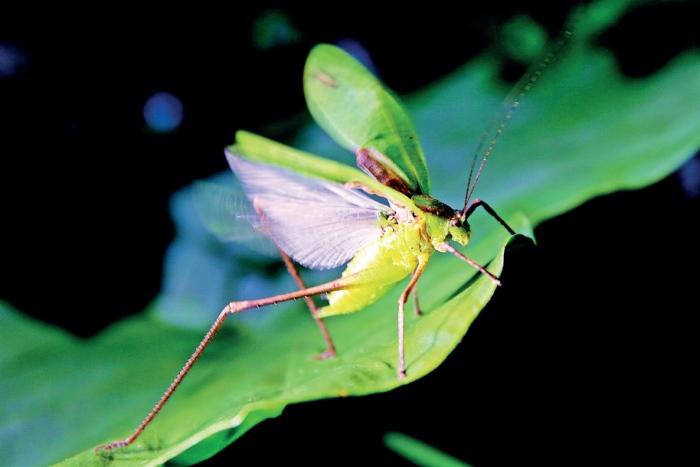 三富休闲农场 充满趣味感的夜间导览,我遇见了若虫。