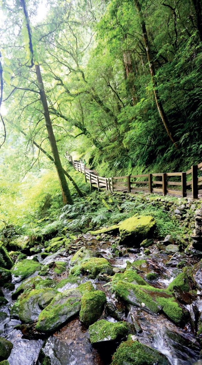 拉拉山自然保育区 慢悠悠地在这生态步道上行走,让大自然的灵气净化我们烦嚣的心。