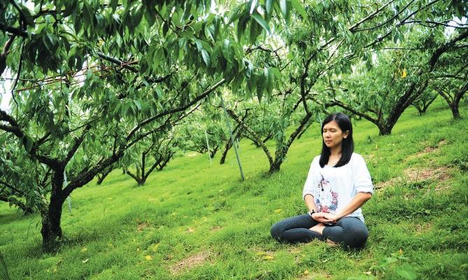 植被苍翠的果园,极适合在此静坐放空。