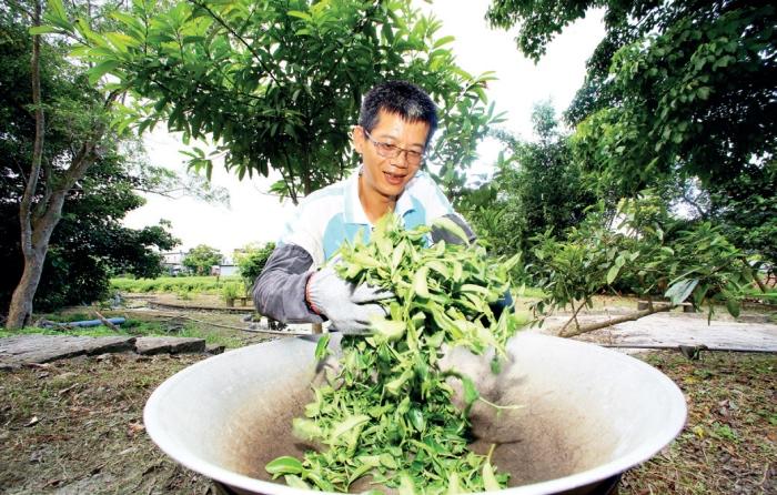 祥语有机农场 场长刘向群示范手工炒茶的技术,这动作主要是用高 温破坏酵素活性,避免茶叶继续发酵,来保有茶叶的香味,因为温度很高,所以需要持续搅拌炒茶。