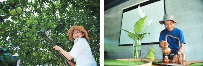 自己动手,体验采摘柚子的乐趣。(左)林大哥让大家体验如何用自然的方式提炼精油。(右)