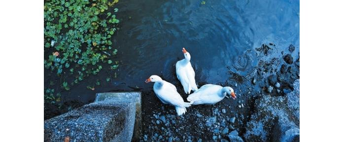 农园里的池塘、荷花、蝴蝶及鸟类呈现丰富的湿地生态。