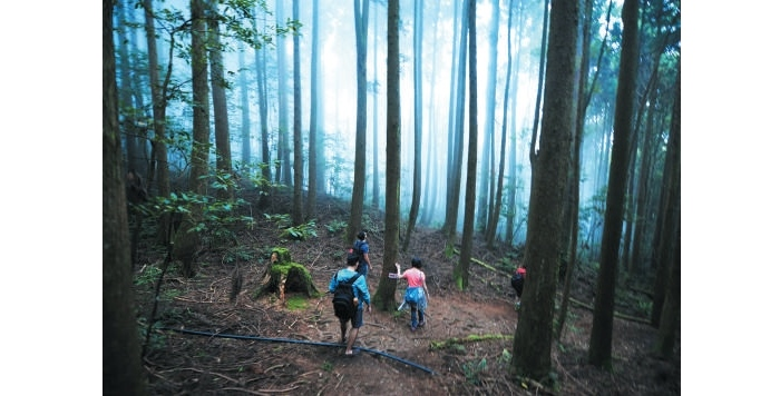 雪霸休闲农场和雪霸国家公园相连,游客可以在限定的时间漫游云雾步道,感受大自然的鬼斧神工。