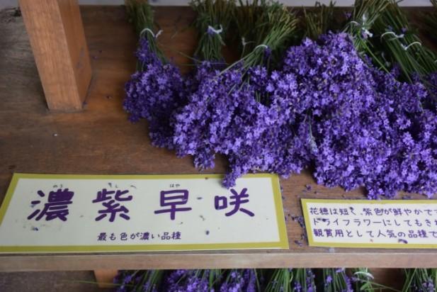 部分薰衣草也会当作切花现场售卖。