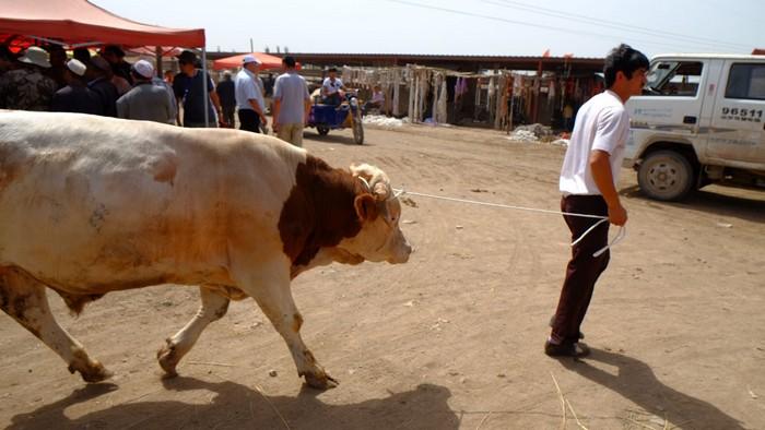 拖着一头牛或拉着几只羊赶来交易的饲主。