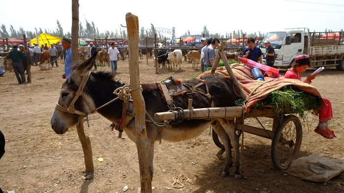 买驴子的老豆不见人影,只剩顾档口的阿女。