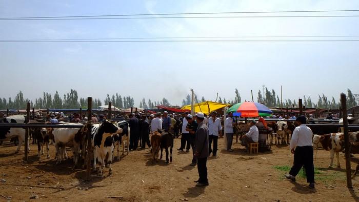 每逢周日开市的活畜交易市场,由于是露天的关係,现场尘沙飞扬,加上人众畜多,感觉热闹而凌乱,但人气鼎沸。