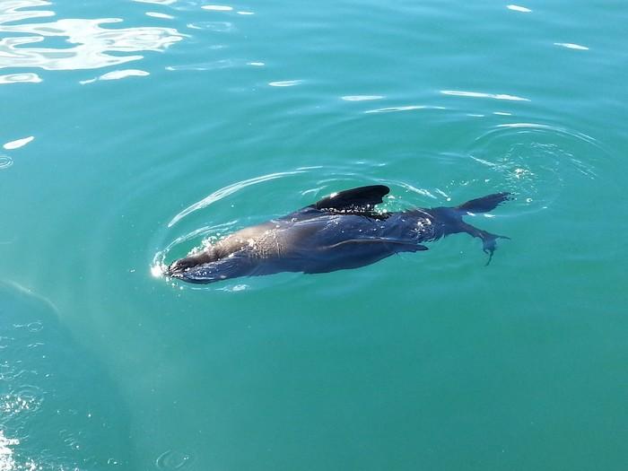 码头就看到海豹了!
