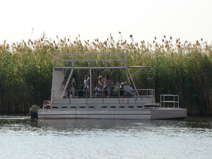 透过双层船游,你可以在船顶取得最佳视角,将沿途的野生动物全摄入镜头里。