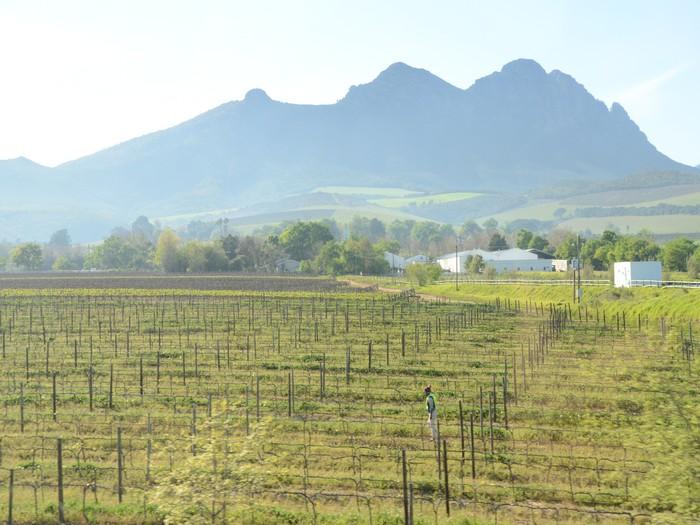 南非也盛产葡萄酒哦!
