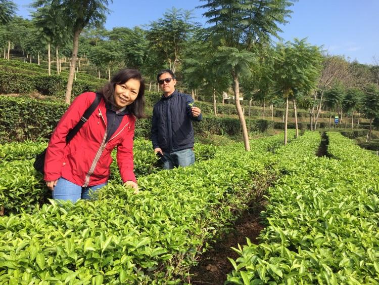 """台湾农民以乡土为根、以农情为意,把""""家、家人、家禽、家菜""""与他人共享,为城市人保存了浓浓古早乡情。"""