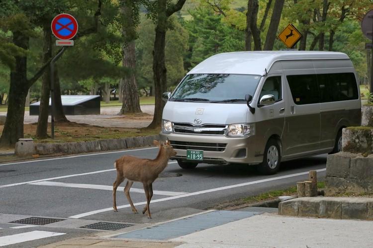 deer signal3