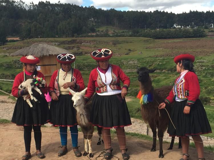 还可瞧见南美洲的骆马耶!(俗称:羊驼)它可是南美洲安地斯山脈高原的特有动物群。