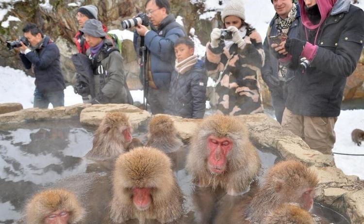 温泉已不再是人类的享有,连长野县地狱谷的猴子也懂得在寒冷的冬天里浸在温泉御寒哩!