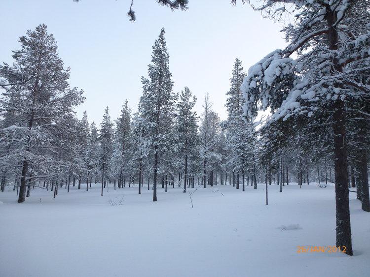在漫天的冰雪中欣赏世界安静的美。