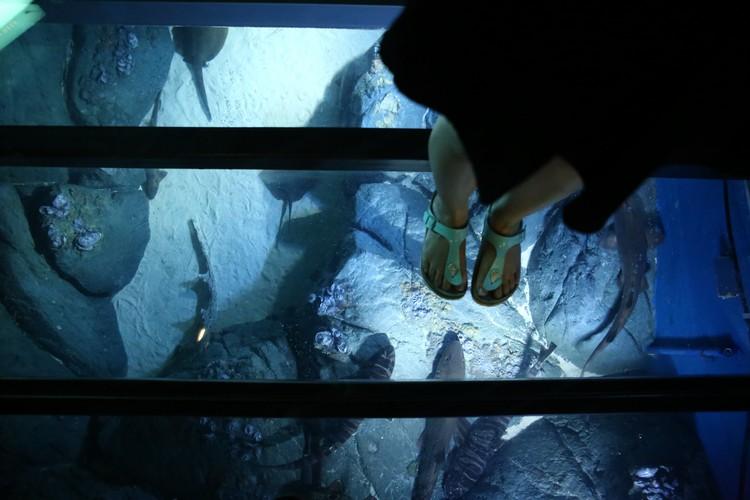放胆走在透明玻璃地板上,成群的水族朋友在脚下徘徊,让每一步都能体验不同的惊喜和奇趣。