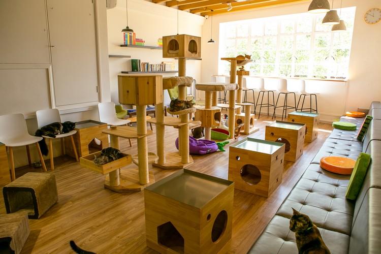 Sam和Sue提供非常舒适的环境,为猫咪们的安乐窝。