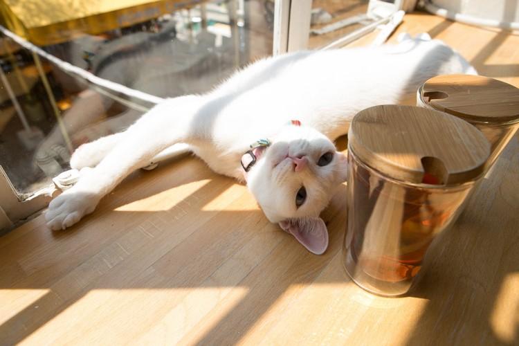 猫咪们都在猫の庭卖萌地等你喔!