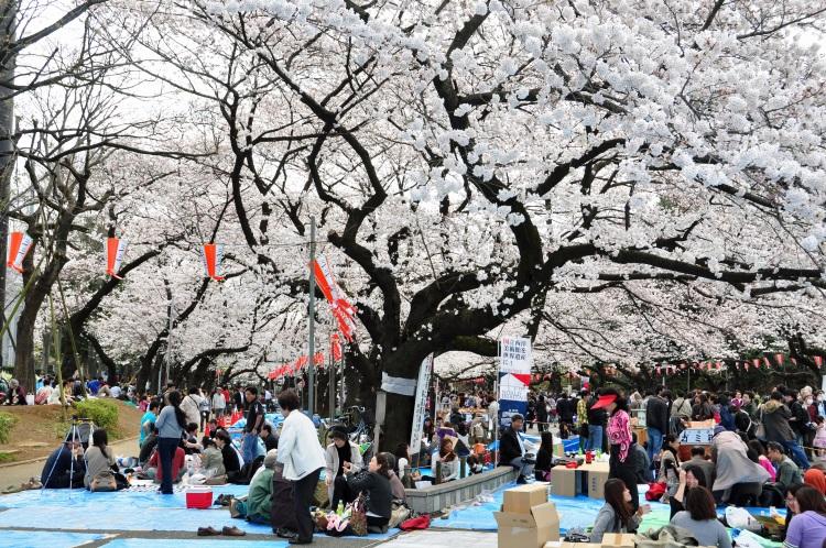 Japan 20100401 (40)