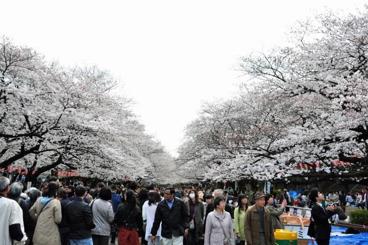 Japan 20100401 (42)
