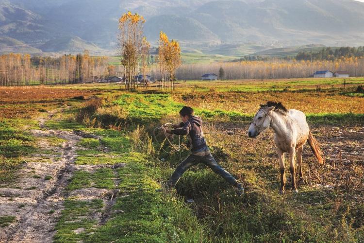 父母到城市打工后,放牛牵马、照顾家里的牲畜就成了彝族小孩的责任。