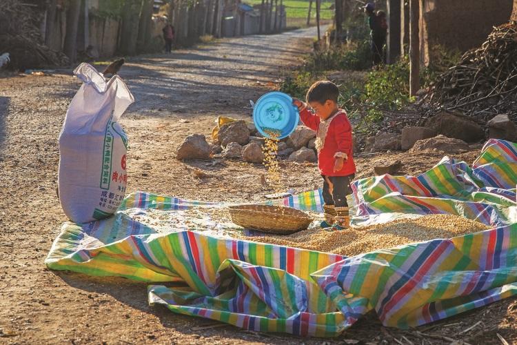 约3、4岁的彝族小孩在帮忙晾晒玉米。