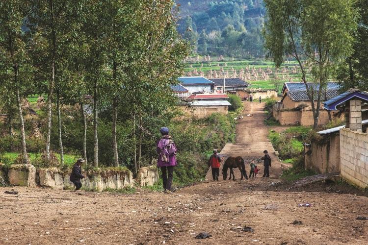 中国政府为了改善彝族的生活,建设了新居给村民居住,以现代化的砖瓦房取代土屋。