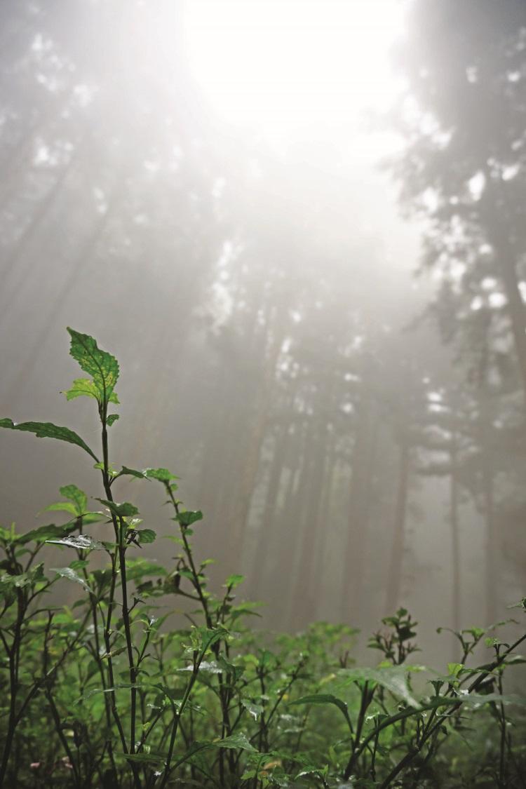似梦似幻的忘忧森林。