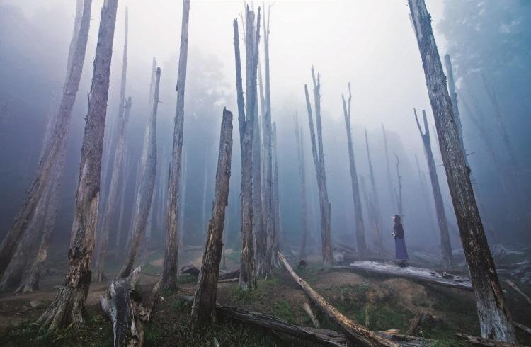 高耸如天,笔直黝黑伫立着的柳杉木群。