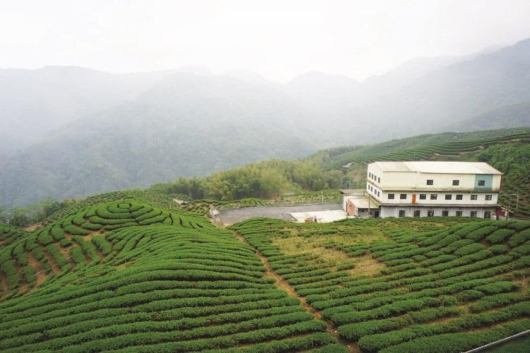 一圈圈环绕,诗情画意一般的八卦茶园美景。