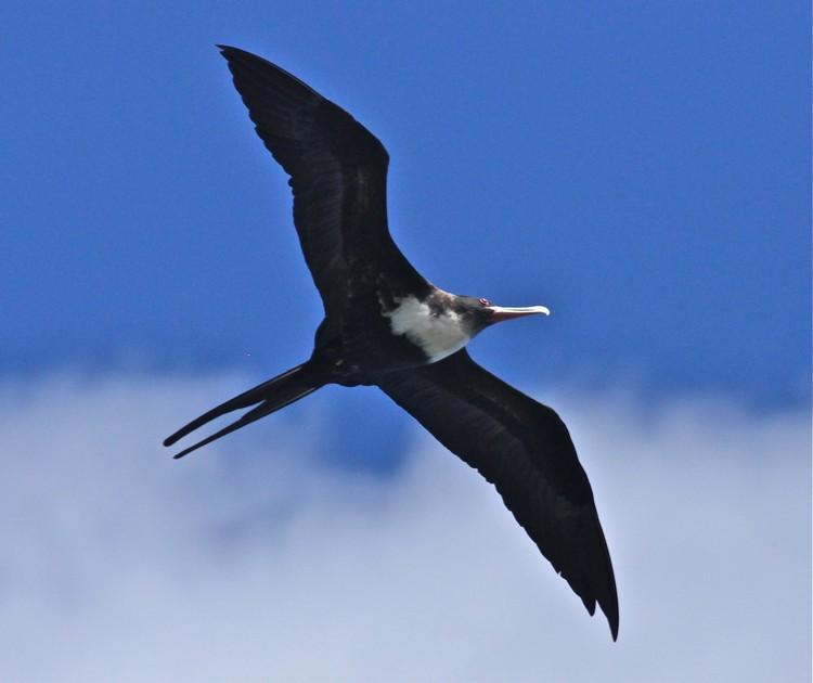 这里是保护区,保护着多种海鸟,是海鸟们的天堂。