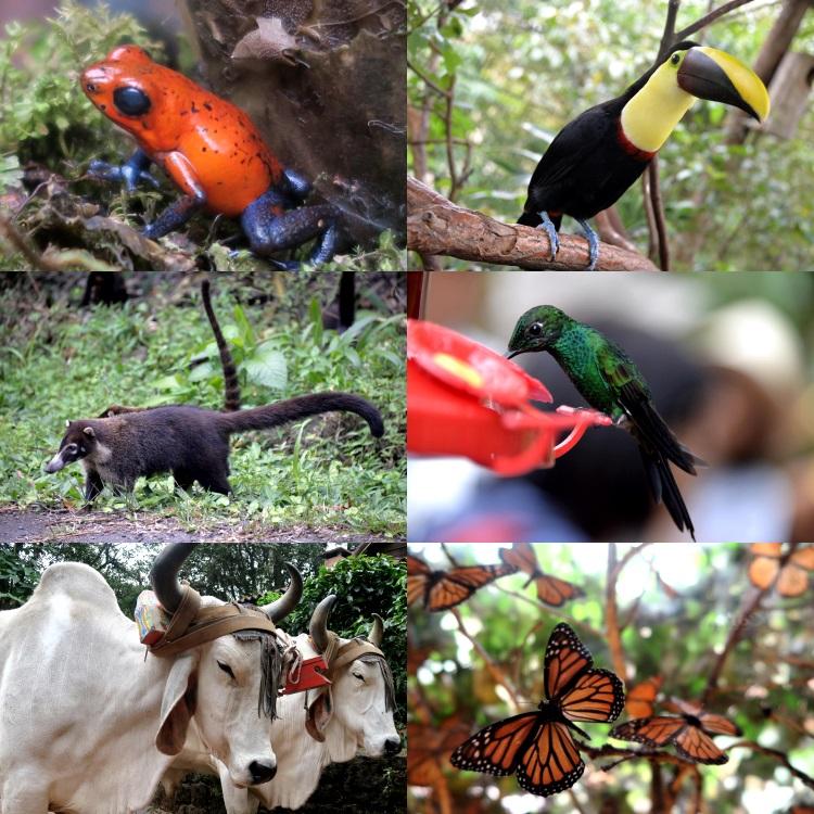 哥斯达黎加全民维护大自然的气息;奇珍异禽都是他们的宝贵生物。