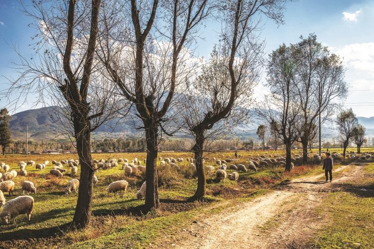 """""""天苍苍,野茫茫,风吹草低见牛羊。""""这句诗词再适合不过了。"""
