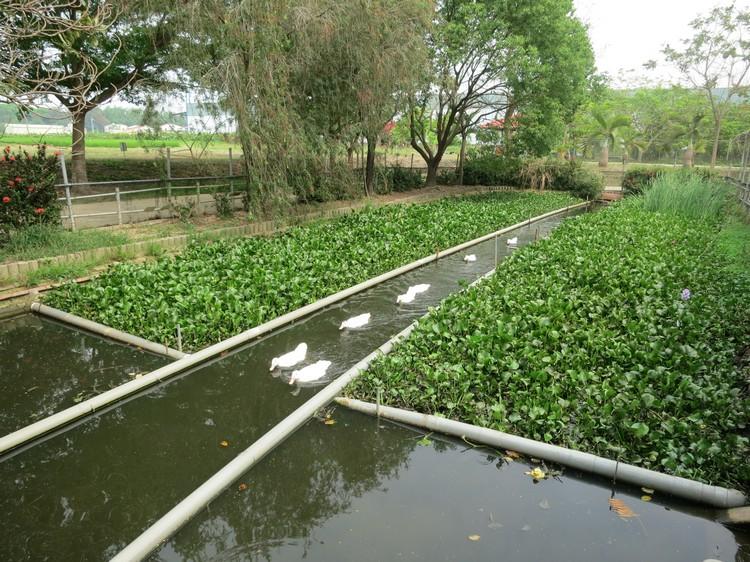 台南鴨莊休閒農場 2