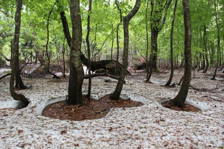 """这是一座未曾经过人类破坏,保有最原始自然的毛榉原生林地。登高远眺,可以看到12个湖沼,称""""十二湖""""。白山神地,是从青森县跨越秋田县约13万公顷的山岳面积,这里是饱览最原始风光的最佳地带。林里共存着不同种类的动植物群,生态系统保持着自然形态,白神山地最有名的瀑布河水清澈,加上沿途绿林,让人倍感放松,享受漫步在大自然的乐趣。"""