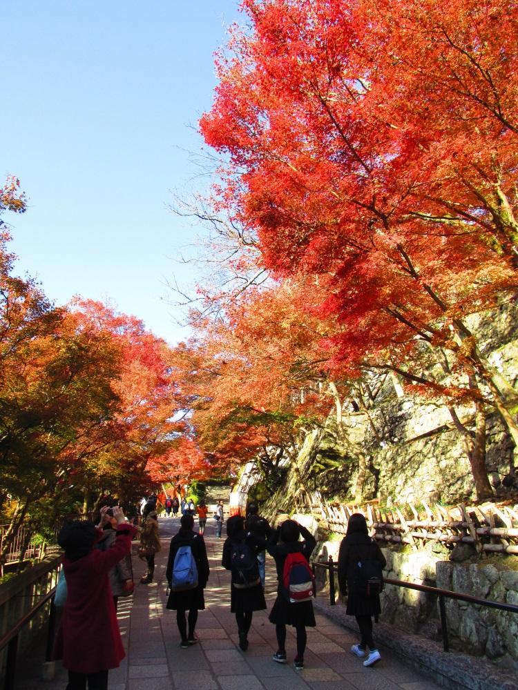 日本赏枫名胜 -- 京都。