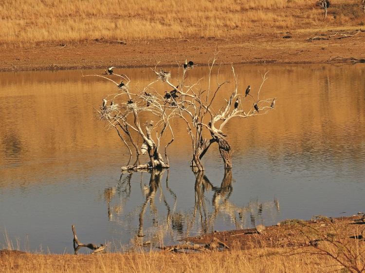 来体验非洲大草原的神奇魅力吧!