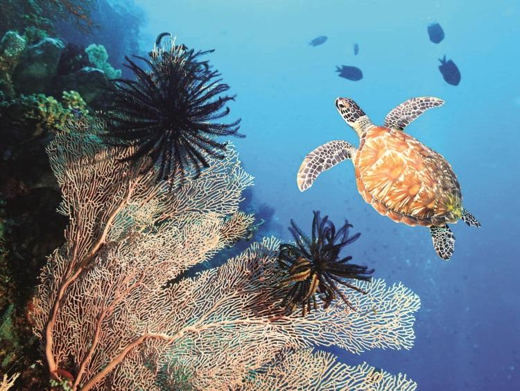 来到这里浮浅,可以看到大大的海龟在脚下悠游。